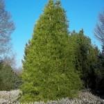 Arboretum février 2013 (89)