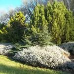Arboretum février 2013 (90)